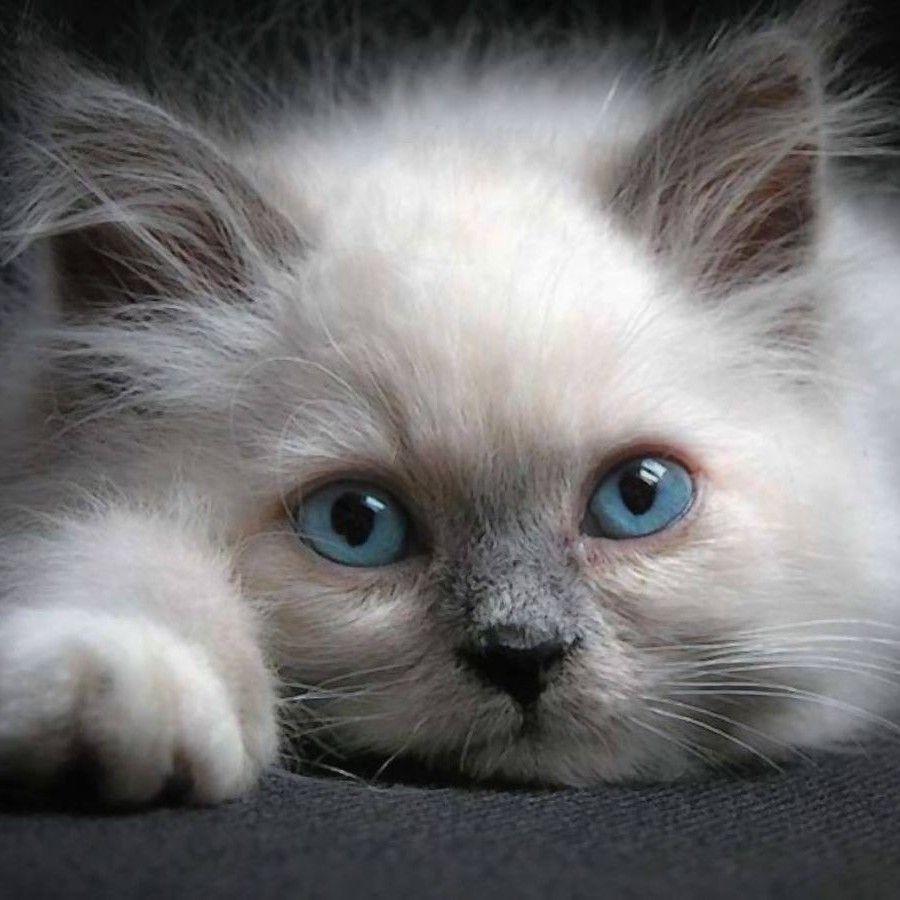 Pin By Vanessa Gonzalez On Cats Kittens Cute Cats And Kittens Pretty Cats Cute Cats