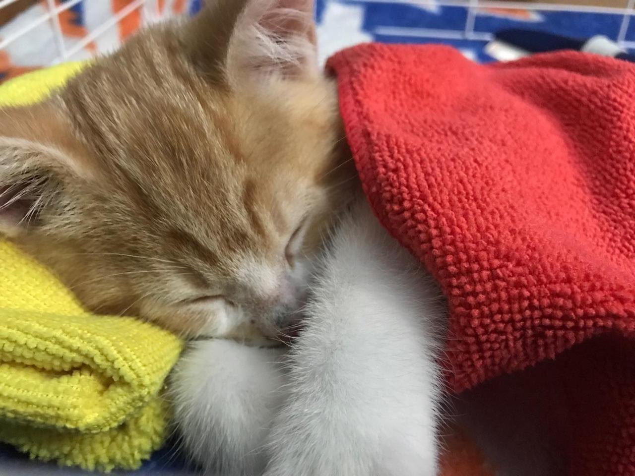 Your Ultimate Kitten Development Guide Cat Having Kittens Kittens Cat Lovers