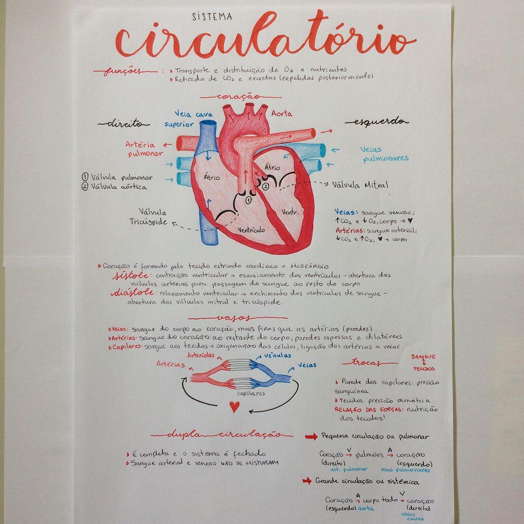 Sistema Circulatorio Biologia X Sistemas X