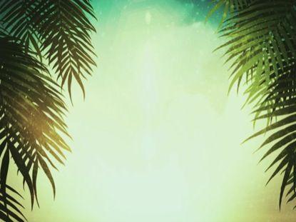 Backgrounds Palm Sunday Backdrops