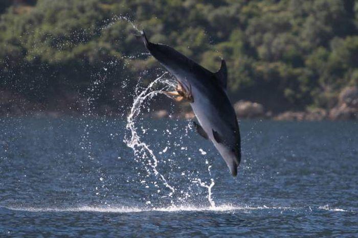 Такие прикольные картинки | Дельфины, Фотографии и Картинки