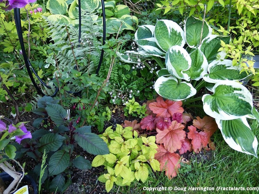 Early summer shade plants in my garden 4 varieties of for Japanese outdoor plants
