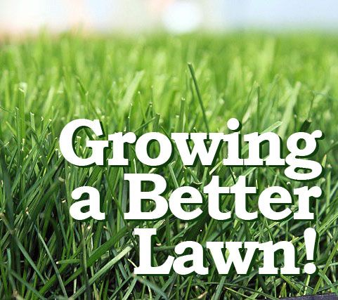How To Grow A Better Lawn Grass Seeds Do Make The Difference Growing Grass Grass Seed Lawn