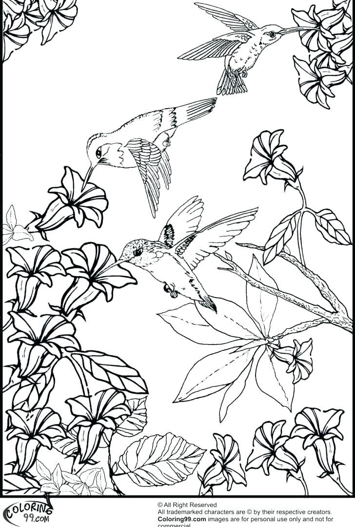 Hummingbird Coloring Pages Excellent Beautiful Page Printable For Kids Size Cute