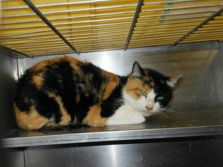 Joni In A Cage Since 12 5 She Has No Interest Joni Is Nervous And Timid Probably Would Do Well W Barn Or Outside Home Save Joni Kitty Calico Timid