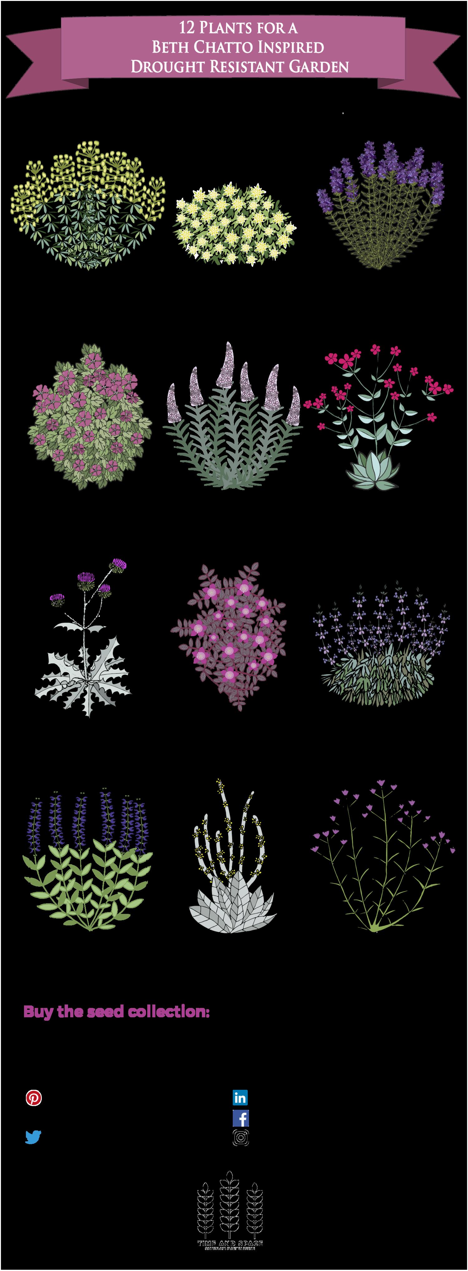 12 plants for a drought resistant garden plants pinterest jardins jardin sec and jardinage. Black Bedroom Furniture Sets. Home Design Ideas