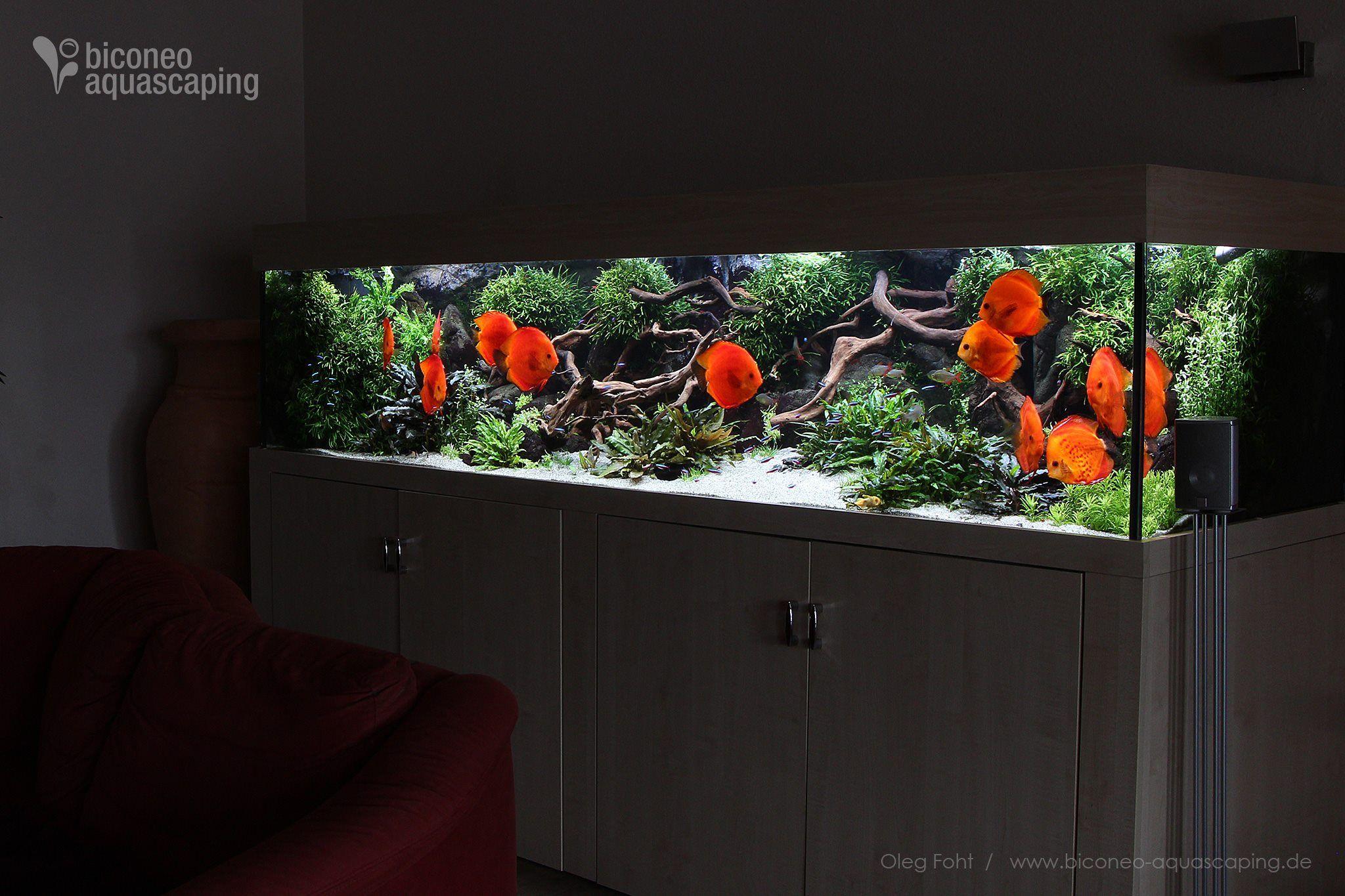 5d5d495455d678976805d47c647f978a Frais De Aquarium Tropical Schème