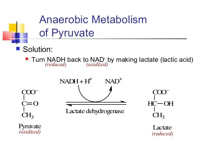 Reduction of Pyruvate to Lactate or Oxidation of Lactate to Pyruvate