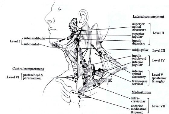 Neck lymph node levels... Note: infraclavicular