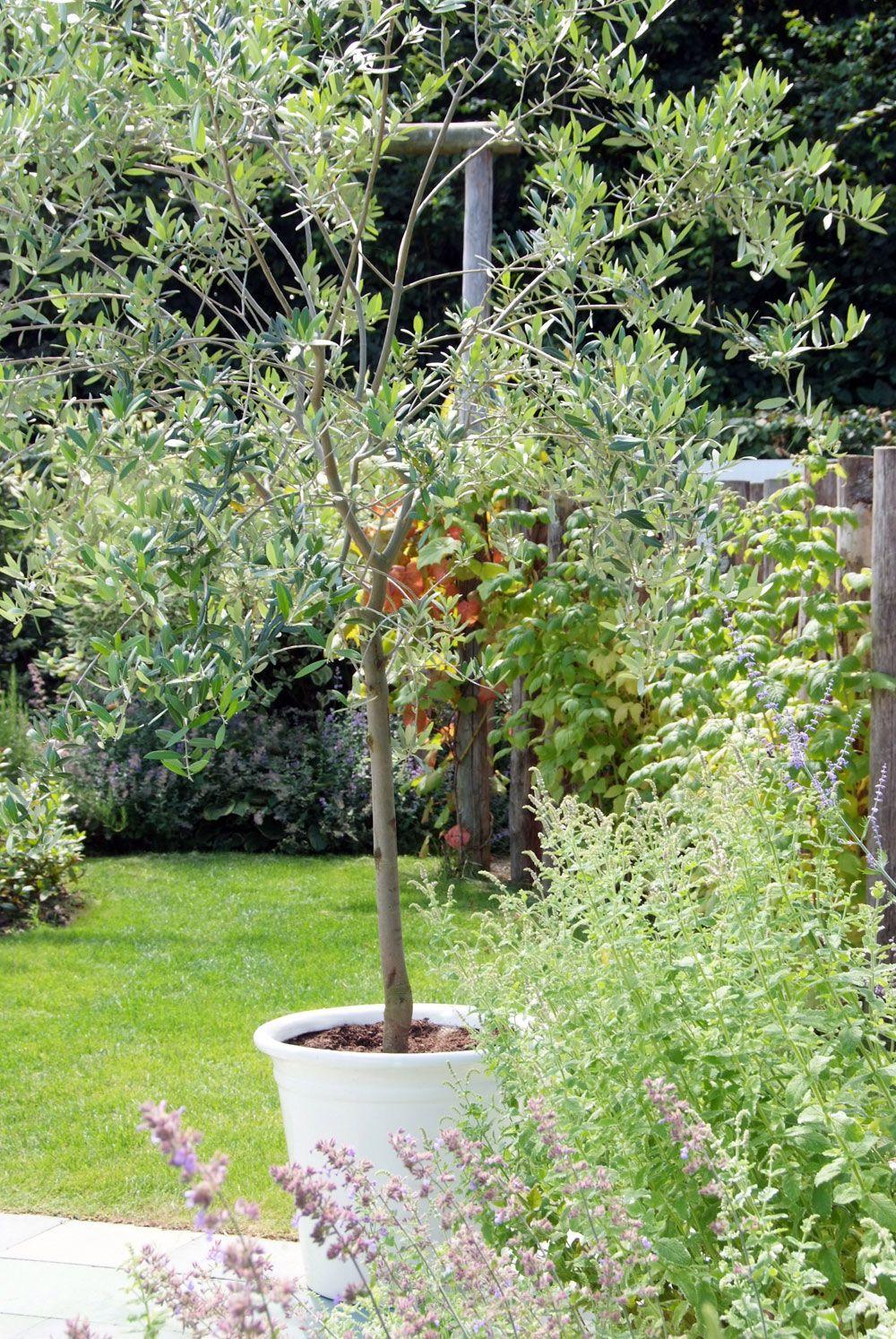 7 petits arbres à planter en bac Arbres en pots, Petit