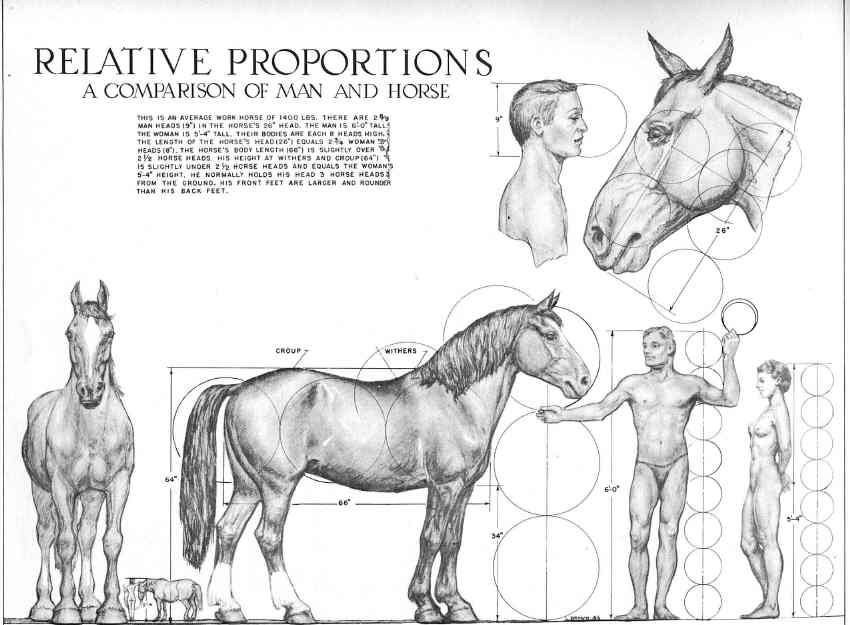 Relative Proportions - Man and Horse | study | Pinterest | Caballos ...