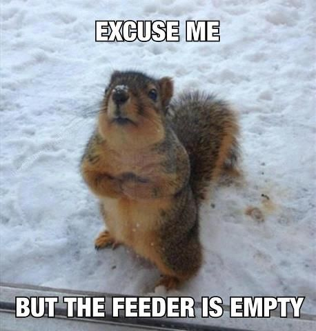 excuse me! but the feeder is empty.