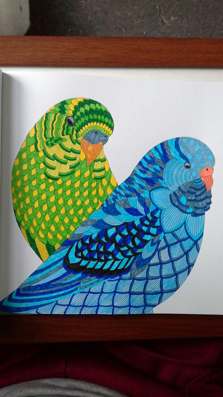 Budgies from Millie Marotta's beautiful birds and treetop