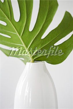 Tropical Leaf in White Vase - Stock Photos