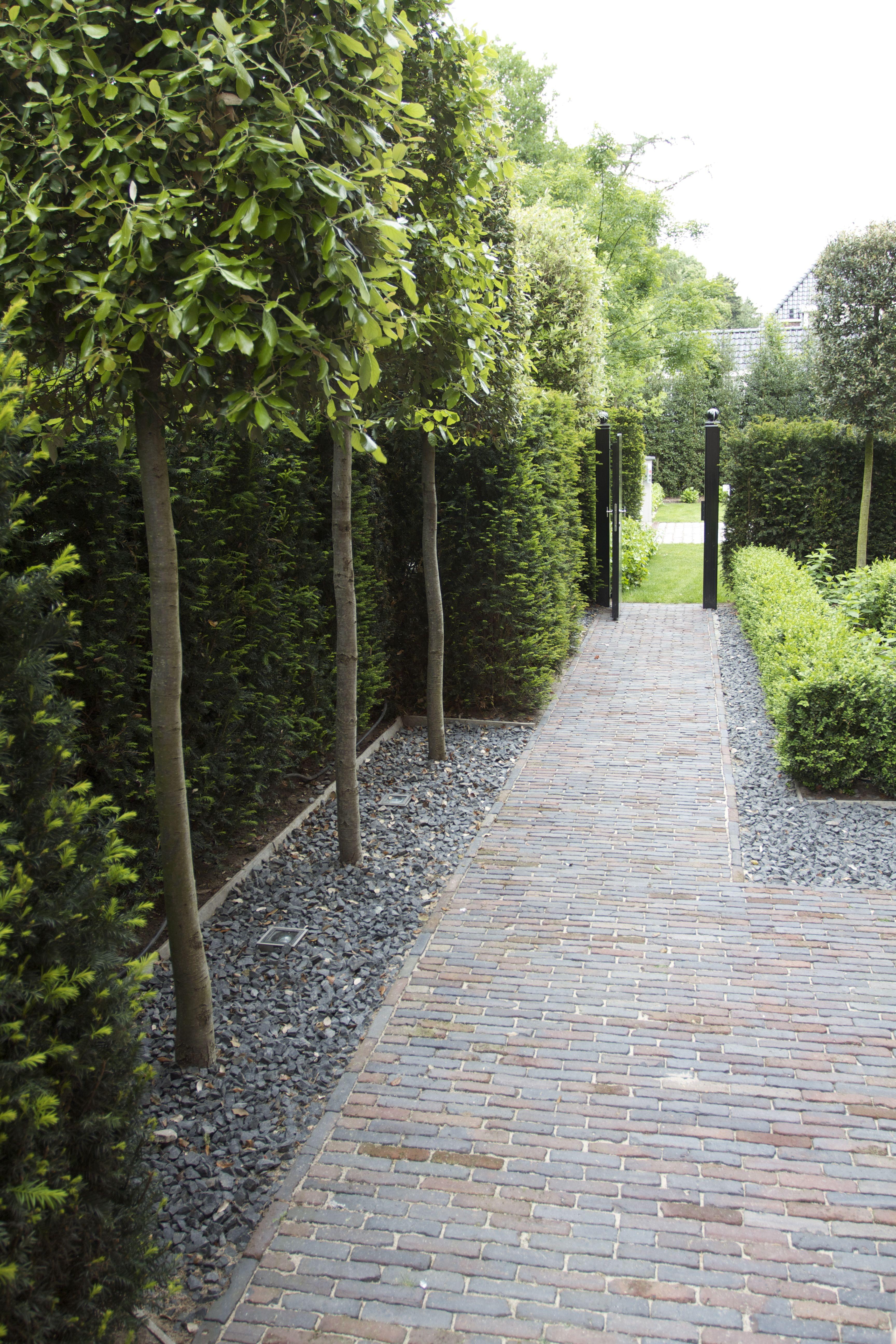 Path, Planting And Yew Traditionele Tuin Met Gebakken Klinkers