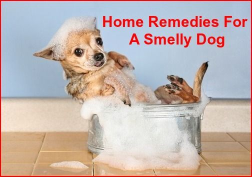 Home Remedies For A Smelly Dog Smelly Dog Dog Smells Dog Remedies