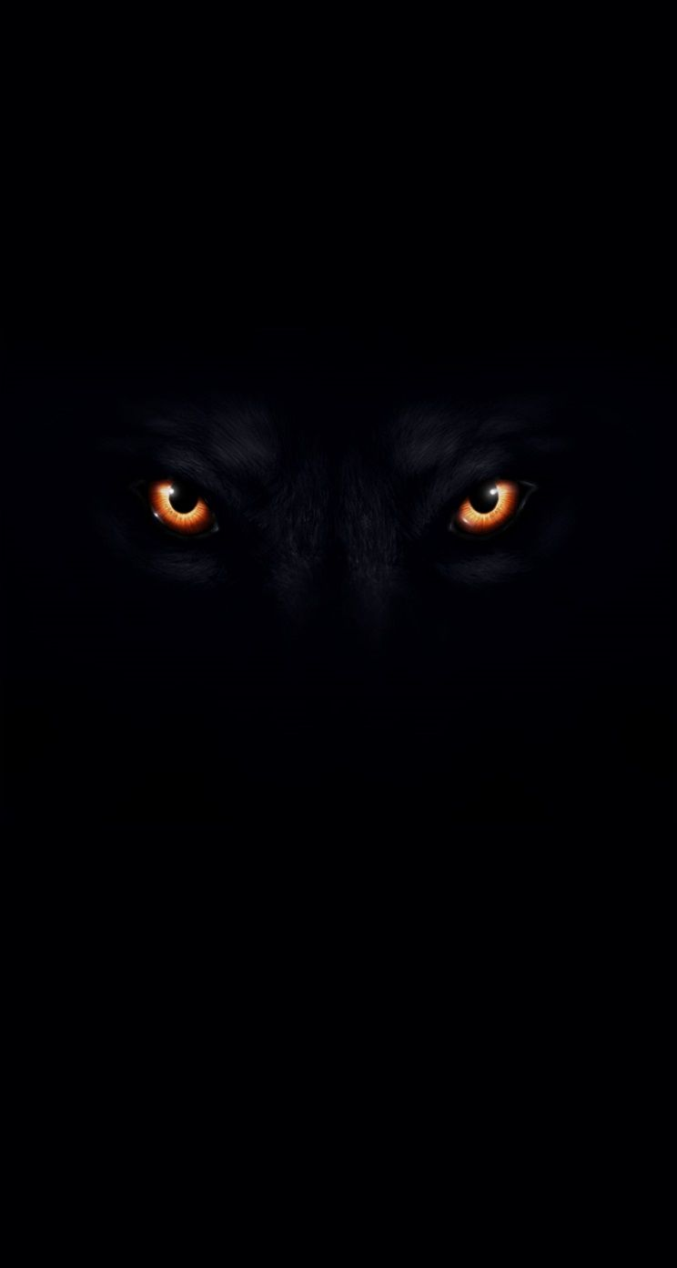 Wolf Picture With Black Background Black And White Wolf