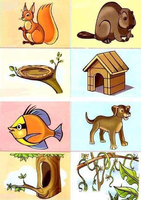 animals and their homes printables (1 Hayvanlar