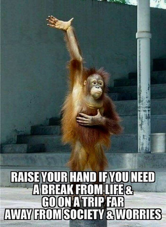 Top 60 Funny Memes And Hilarious Sayings Page 5 Of 6 Daily Funny Quote Funny Quotes Funny Monkeys Funny