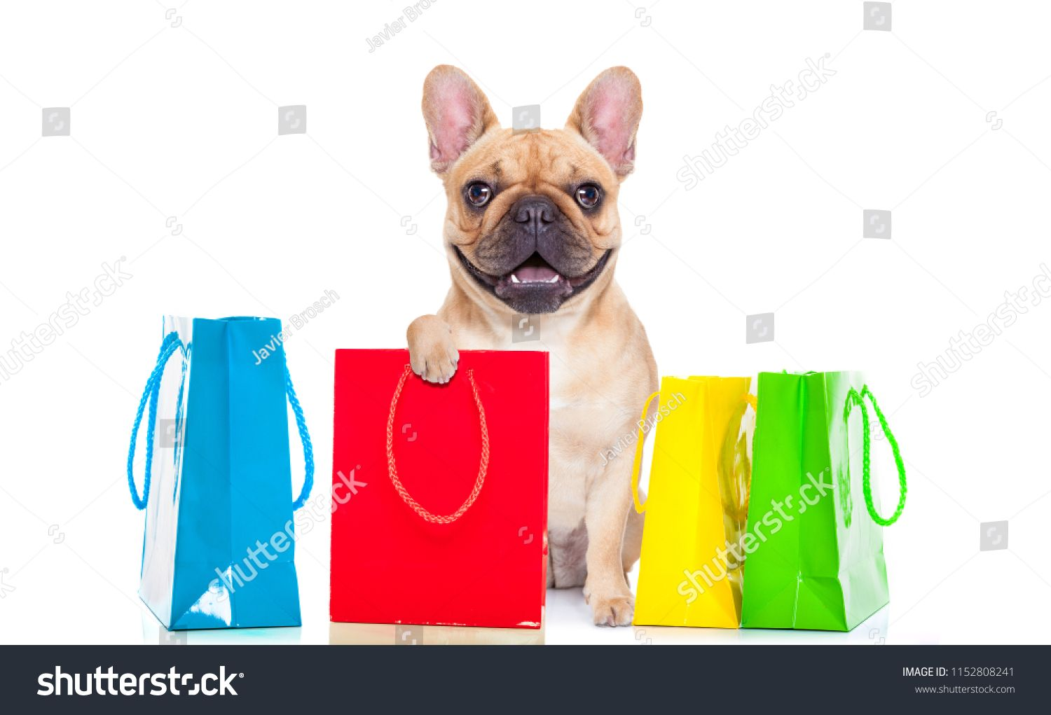 French Bulldog Dog With Shopping Bags Ready For Discount And Sale At The Mall Isolated On White Backgroundshopping B French Bulldog Dog French Bulldog Bulldog