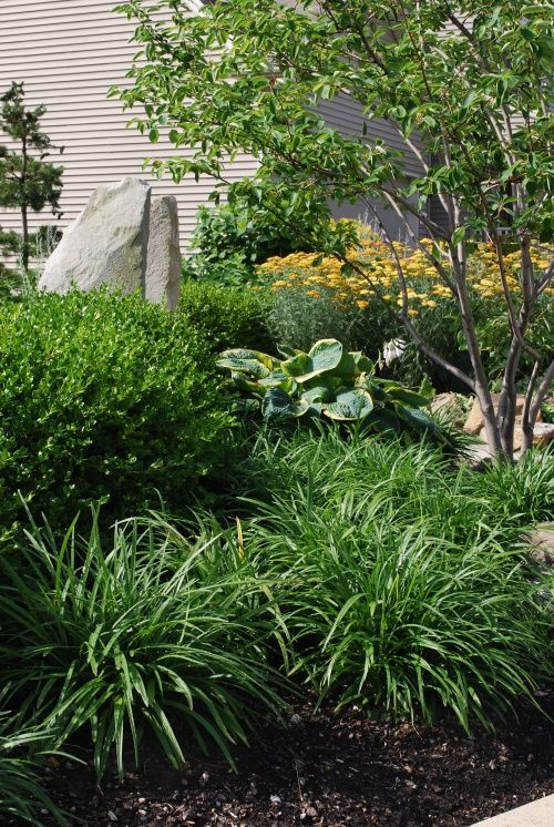 Liriope And Boxwood Trees And Shrubs In My Yard Yard Design