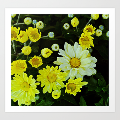 White mixed with Yellow Art Print by Cindy Munroe Photography - $15.60