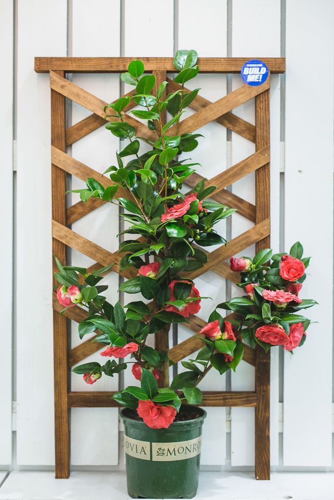 How To Build A Diy Mini Garden Trellis Backyard Garden 400 x 300