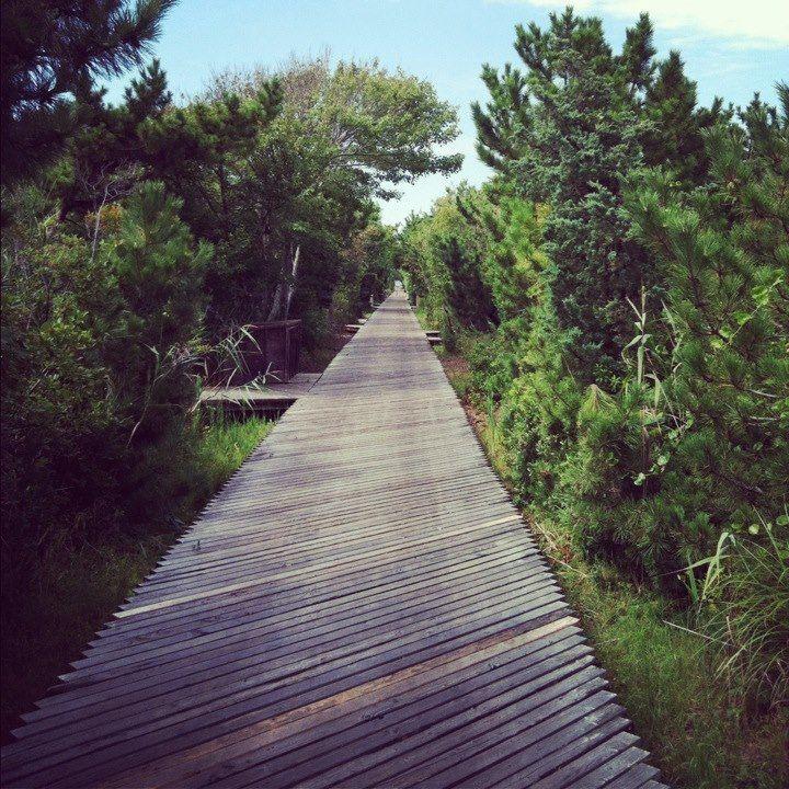 Fire Island: Fire Island. Photo By Sammetsfan