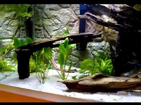 3d Thin Background Video Showing Nice Large Aquarium With Roots White Sand And Thin Beige 3d Background Inside Wall Aquarium Aquarium Aquarium Backgrounds