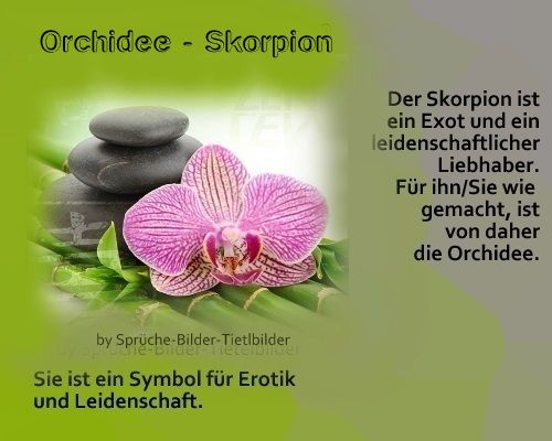 Skorpion   Orchidee | Scorpio | Scorpio, Flowers, Scorpion