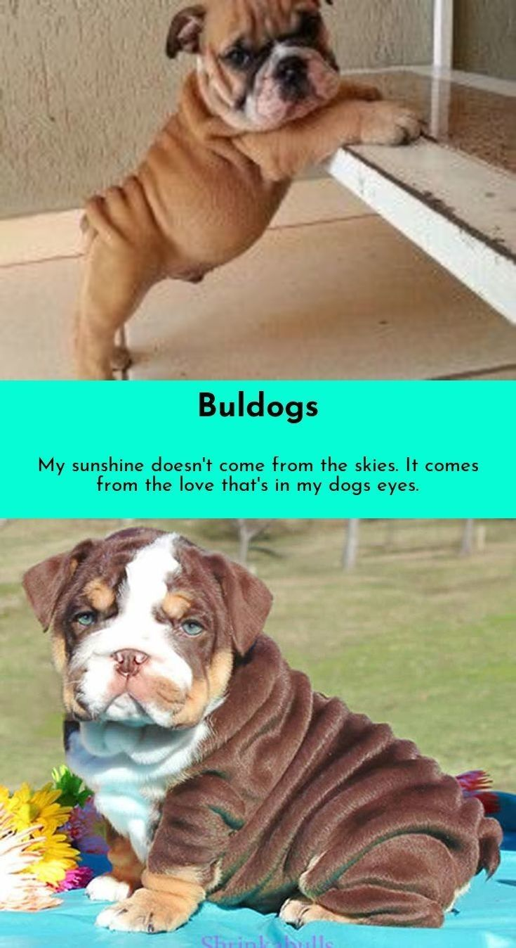 If I Could Be Half The Person My Dog Is English Bulldogs Dog