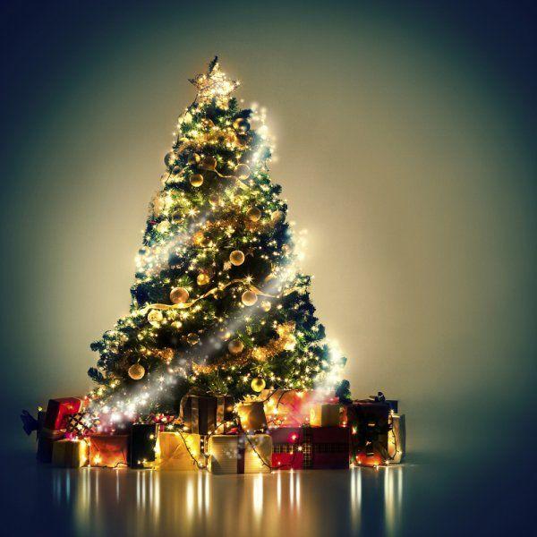 Quel Sapin De Noel Choisir Trucs De Noel Arbres De Noel Et Noel
