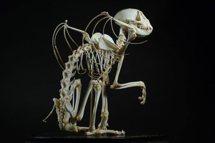 """Chimera"" skeleton. 