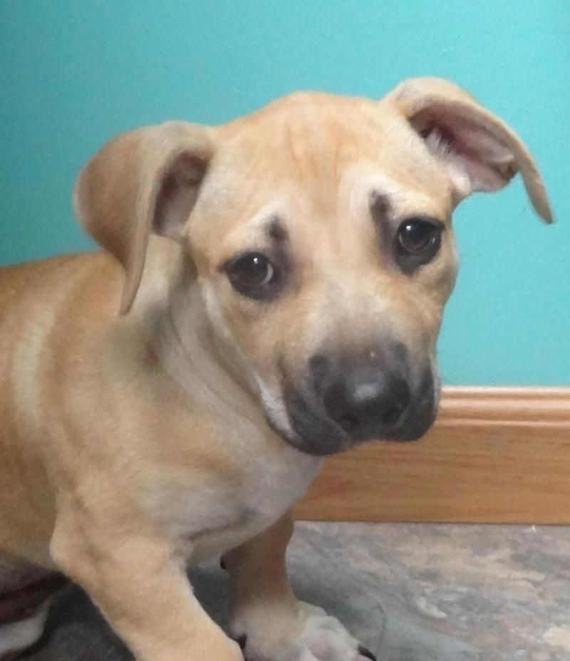 Adopt colby on petfinder pets animals cute animals