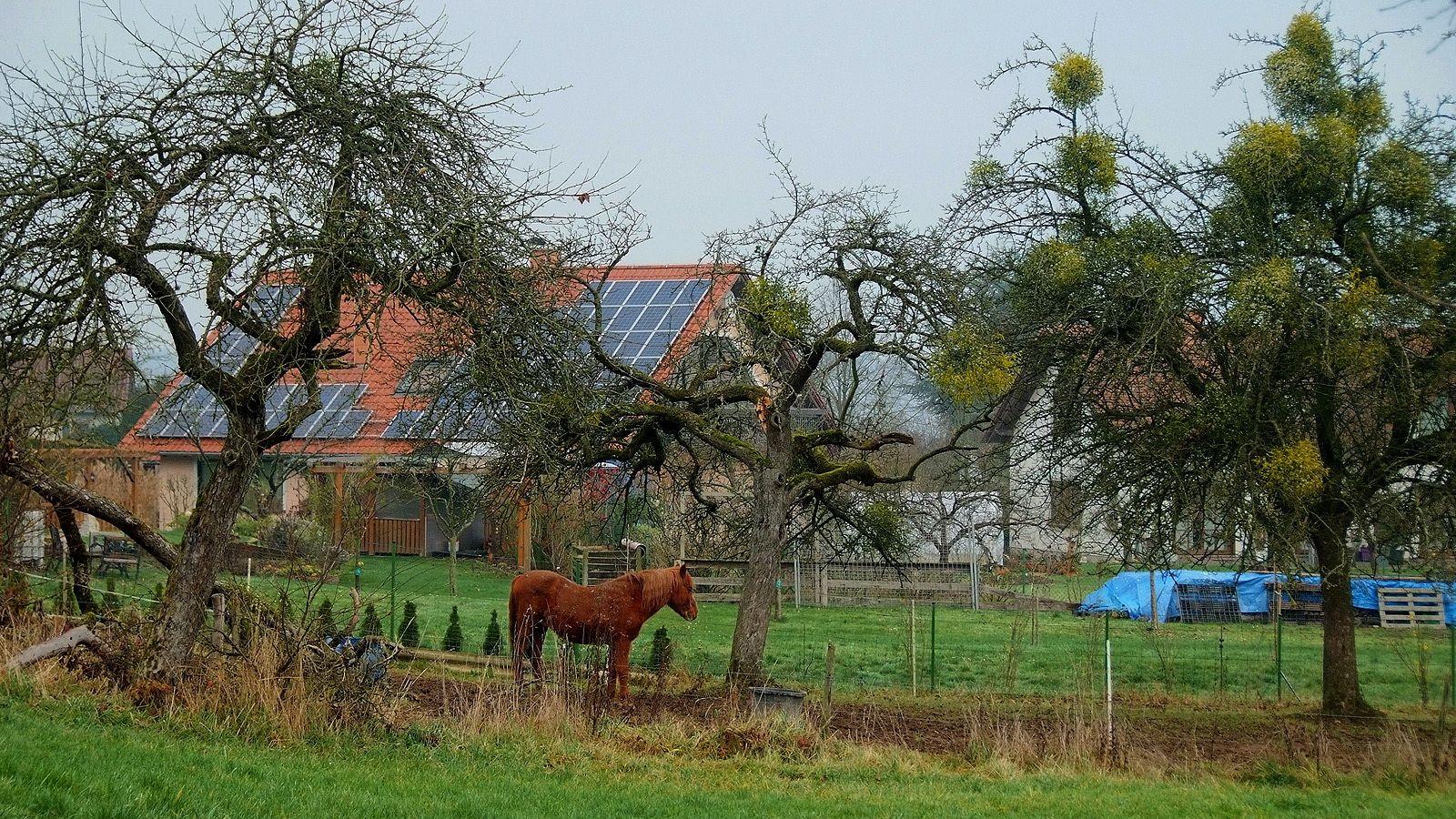So ein warmer Dezember, ... hat auch Vorteile. Meinte das Pferd ...