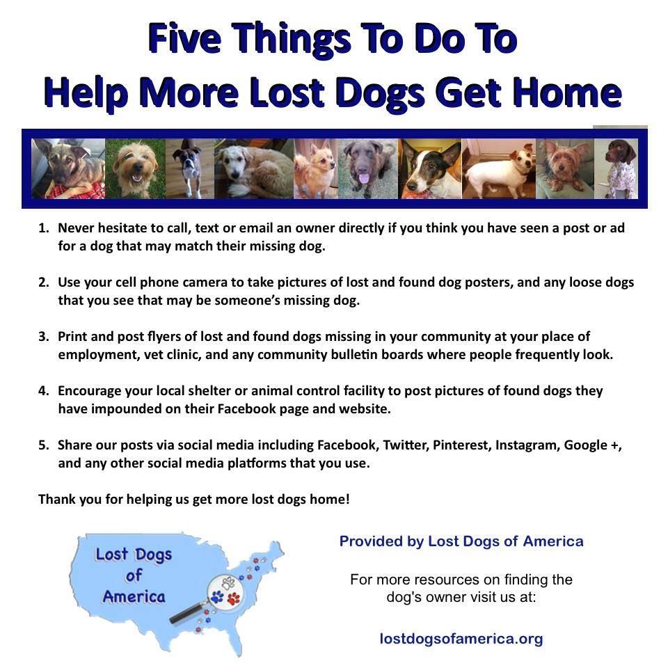 See More At Http Www Lostdogsofwisconsin Org Losing A Dog Losing A Pet Pet Hacks