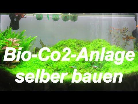 youtube aquarium pinterest aquarium und co2 anlage. Black Bedroom Furniture Sets. Home Design Ideas