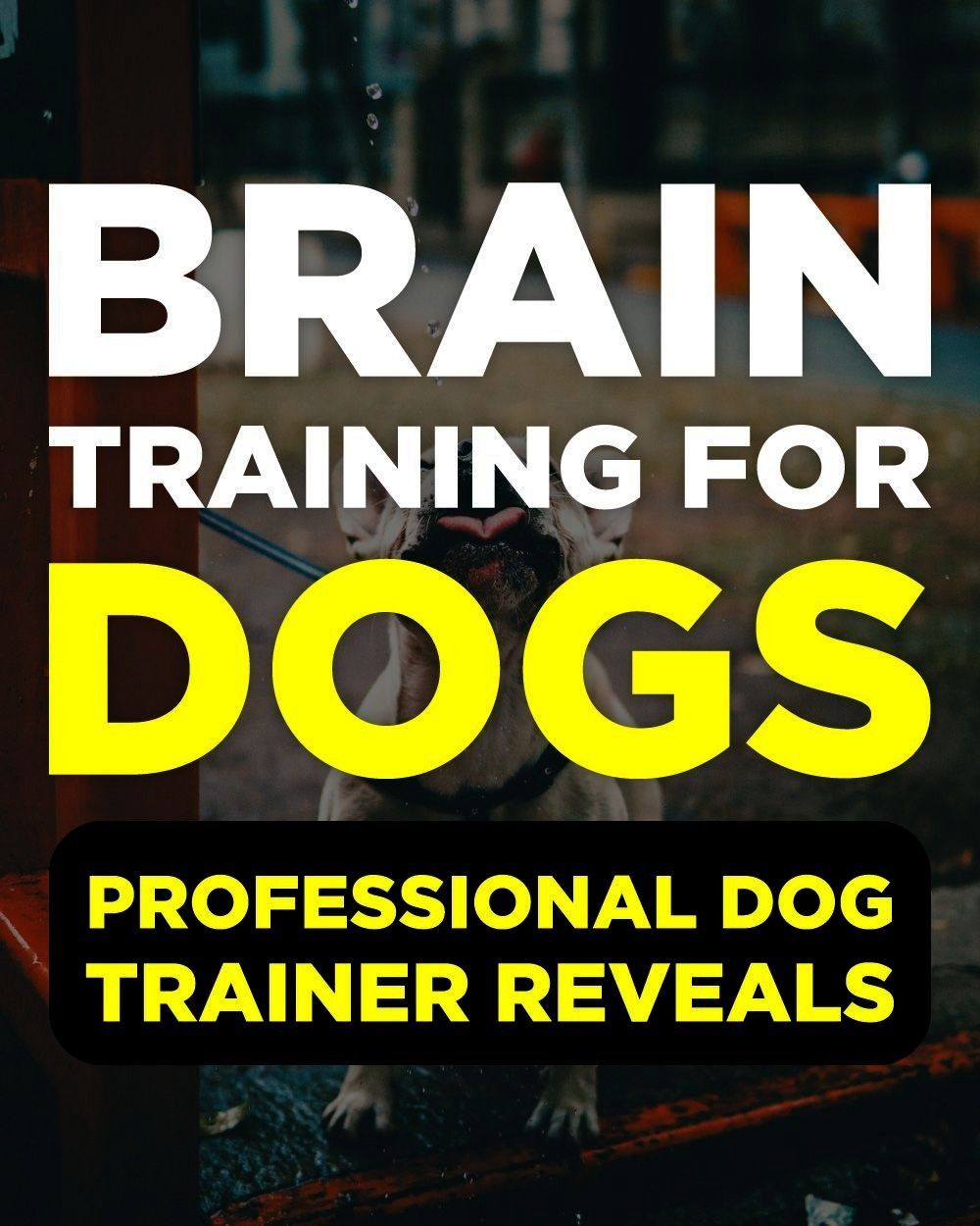Screen Brain Training For Dogs Review Thoughts The usage of a dog kenn  Hottest Screen Brain Training For Dogs Review Thoughts The usage of a dog kenn  Hottest Screen Bra...