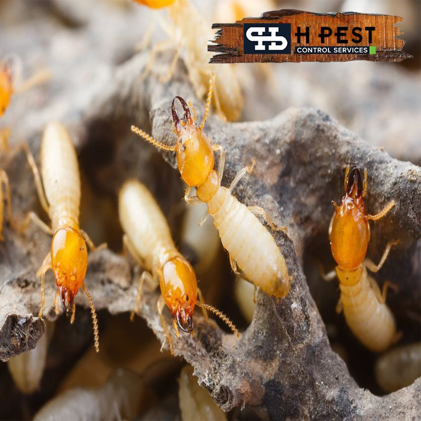 5d640d9877f4b85d53f24e78917acdce - How To Get Rid Of Termites Permanently At Home