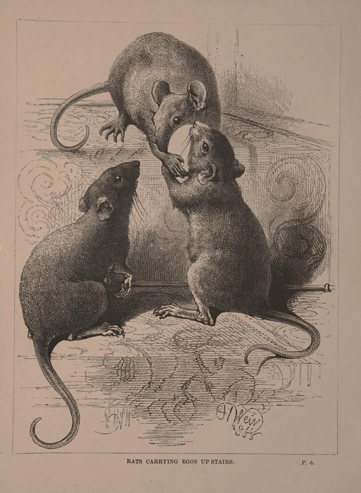 500+ Best Rodentia images in 2020 | rodents, animals, cute animals