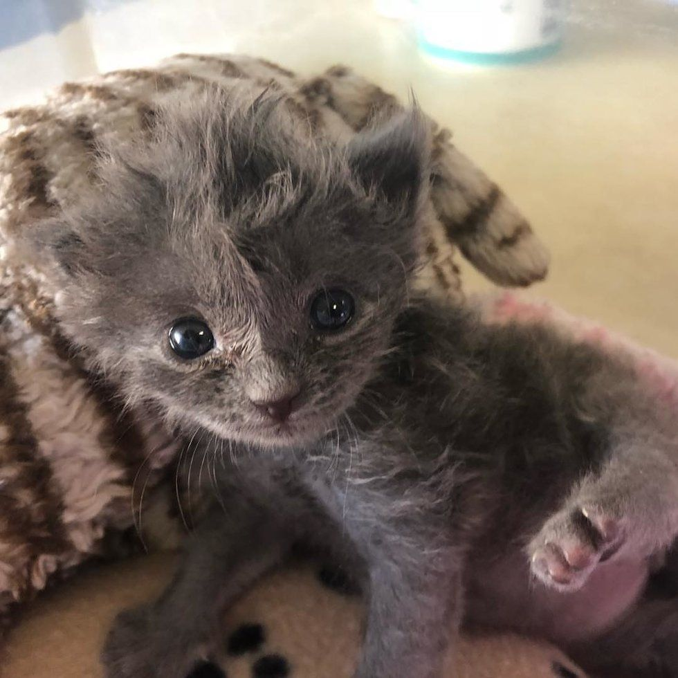 Kitten Found All Alone Just Days Old Bounces Back And Grows A Fluffy Hairdo Love Meow Baby Kittens Kitten Season Kittens Cutest
