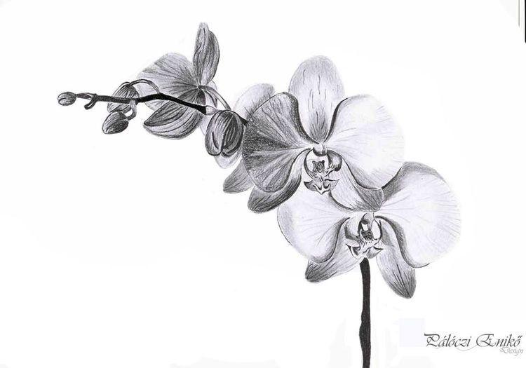 Pin By Wiwat On Lajk Tatu Orchid Drawing Pencil Drawings Of
