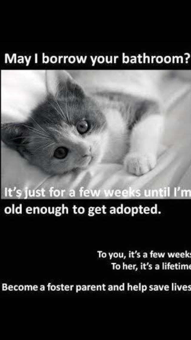 Via The Foundation for Homeless Cats in Phoenix, AZ    Cat Rescue