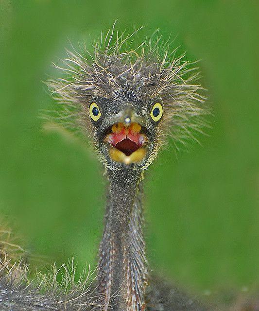 Baby Bird Hair : Yikes!, Animals,, Funny, Birds,, Animals, Beautiful