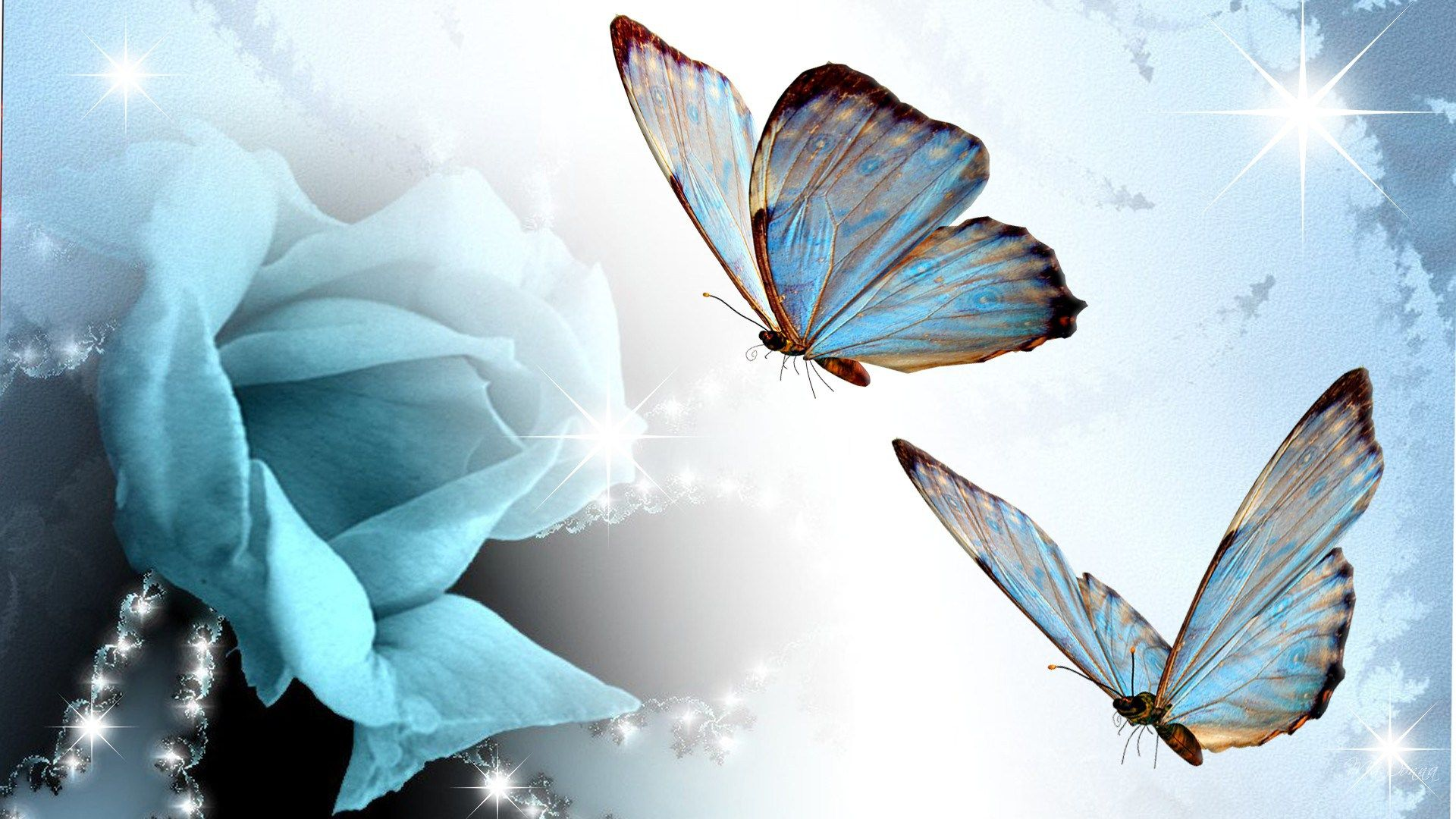 Beauty that is a Butterfly…….. ||| Boundless Blessings by Kamal