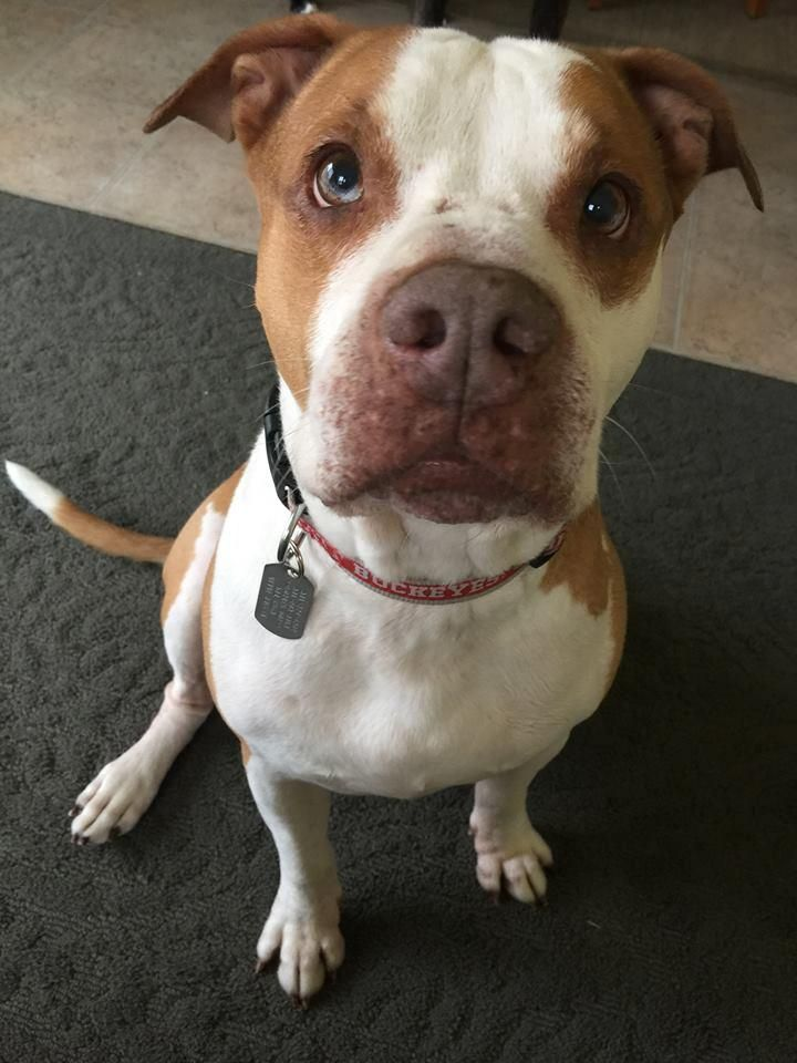 Adopt Gemini on (With images) Rescue puppies, Dog