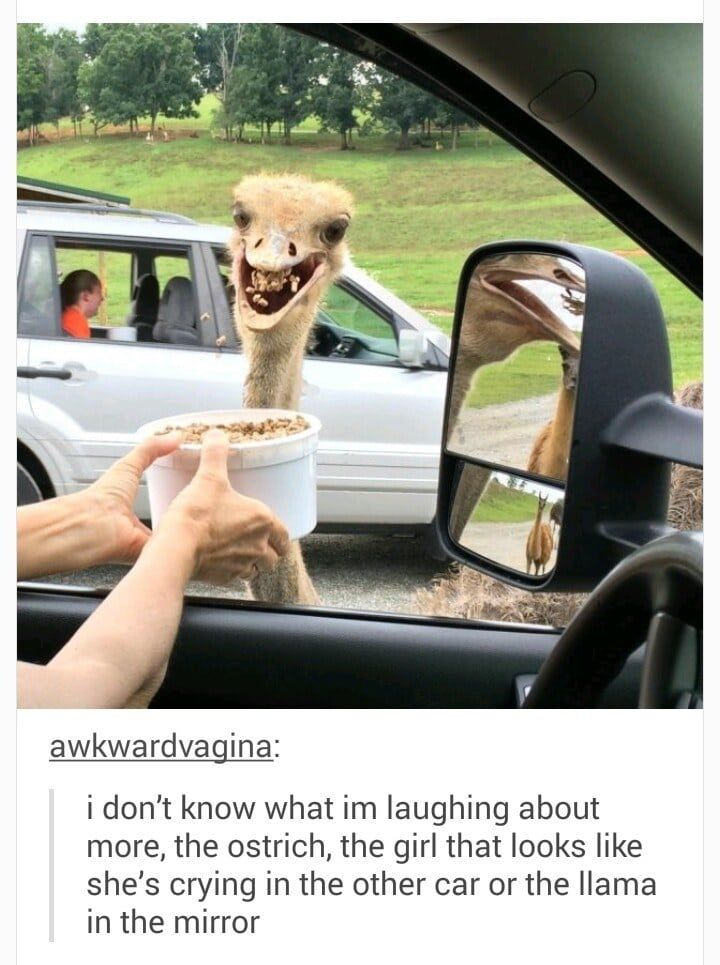 Photo of 19 Silly Animal Photos For When You Need To Laugh, Smile, Cackle, And Feel Better About The World, In General