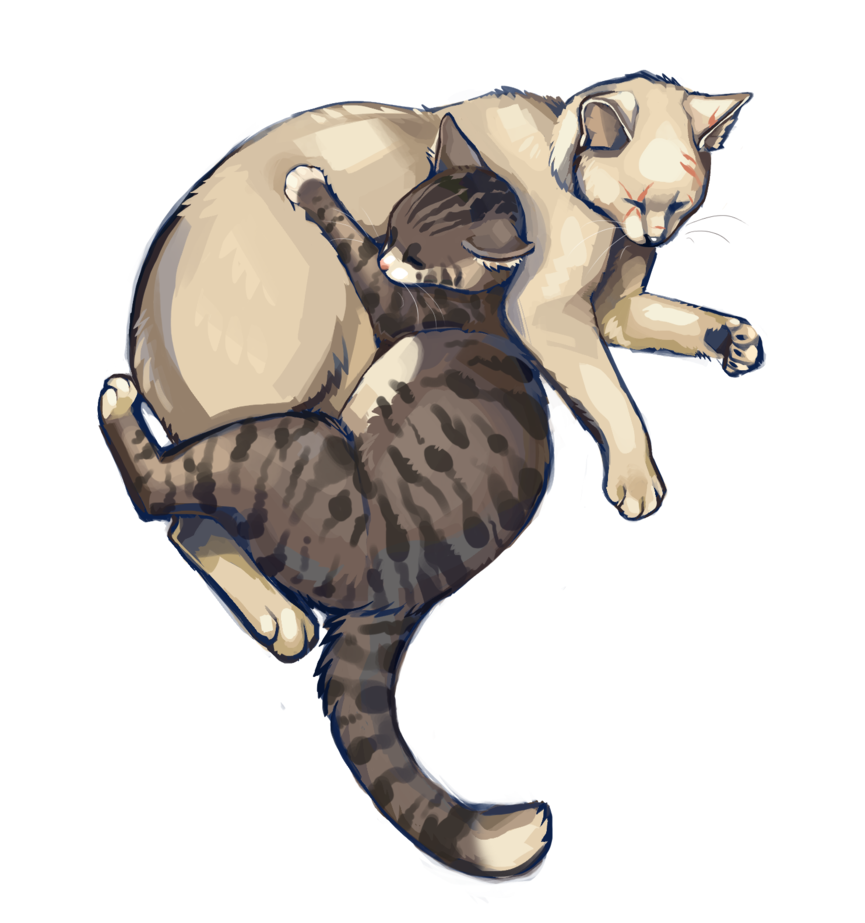 Two By Iambecky Warrior Cat Names