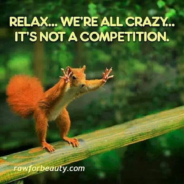 The Nuts May Be Explosive Lol Funny Animals Funny Animal Pictures Animal Captions,Off White And Brown Living Room