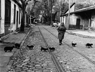 les #chats errants de #Bercy par Robert Doisneau dans les années #1970